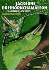 Jacksons Dreihornchamäleon