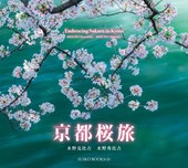 Embracing Sakura in Kyoto