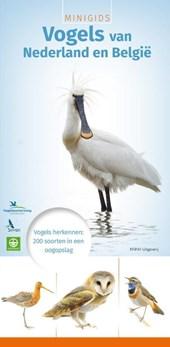 Minigids vogels van Nederland en België