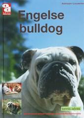 Over Dieren Engelse bulldog