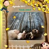 Agenda 2017 klein