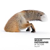 Wildlife photographer of the year pocket diary 2021 | auteur onbekend | 9780565094911
