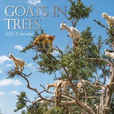 Goats in Trees Kalender 2021