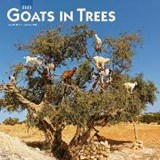Goats in Trees 2020 Square Wall Calendar | Inc Browntrout Publishers | 9781975407476